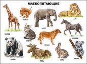 Плакат. Млекопитающие