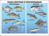 Плакат. Рыбы морские и пресноводные
