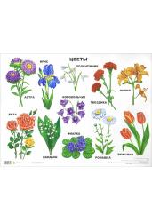 Плакат. Цветы