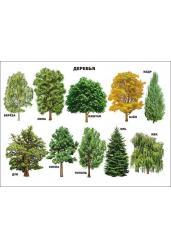 Плакат. Деревья